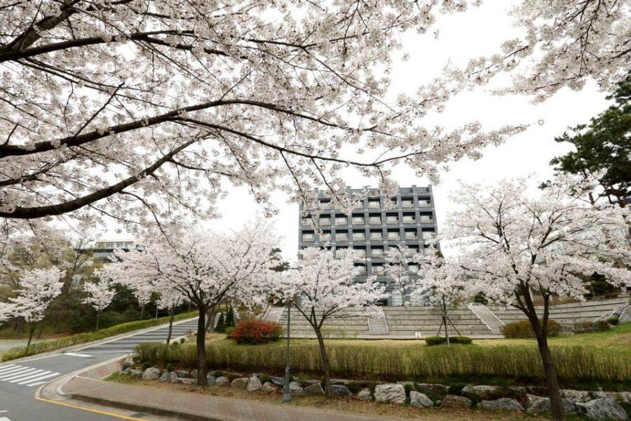 dai-hoc-myongji
